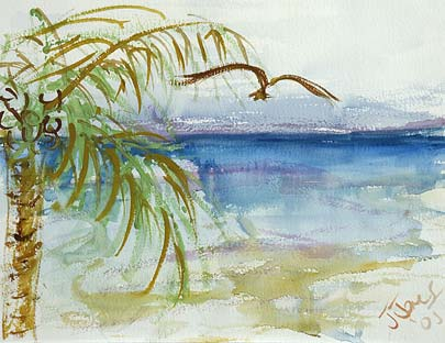 Cuban Palm Tree and Bird